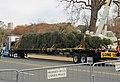 Capitol Christmas Tree 2013 (11050864266).jpg