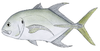 Illustration of a longfin crevalle jack fish