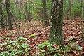 Carbaugh Run Natural Area (7) (8135524287).jpg