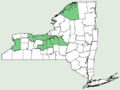Carex sartwellii NY-dist-map.png