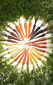 Carrots selectively bred to produce different colors