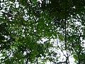 Cascada Roberto Barrios 18.jpg