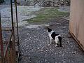 Cat at ruins (356330635).jpg