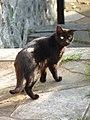 Cat in Trieste - panoramio.jpg