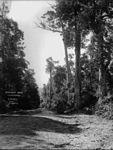 Cataract Road, Illawarra (2448016936).jpg