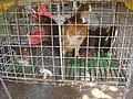 Cats at a cat meat restaurant - 03.jpg