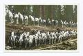 Cavalry on Trunk of Sequoia, Merced Grove, California (NYPL b12647398-69775).tiff