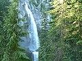 Cedar trees around Comet Falls. (85932b34d4bf43d392f485fe14d9e939).JPG