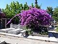 Cementerio General de Santiago.jpg