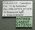 Cephalotes pusillus casent0173701 label 1.jpg