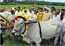 Chandrababu Naidu during the launch of EruvakaEruvaka Punnami is a special festival