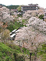 Cherry blossoms at Yoshinoyama 03.jpg