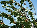 Cherry tree moving in the wind 4.jpg