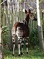 Chester Zoo (8197063629).jpg