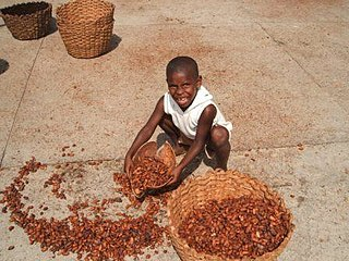 Child labour in cocoa production controversial use of children in the production of cacao beans