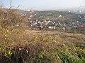 Ciuperca - panoramio - paulnasca.jpg