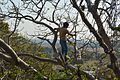 Climbing a Tree.JPG