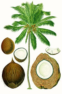 uses of coconut leaves