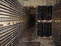 Codorniu - Cellars 1.jpg