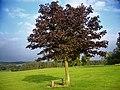 Cofton Park - panoramio.jpg