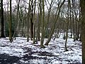 Coldfall Wood, London Borough of Haringey, N10 (3301020095).jpg