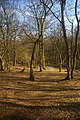 Coldfall Wood, Muswell Hill, London N10 - geograph.org.uk - 1742842.jpg
