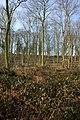 Coldridge Wood - geograph.org.uk - 333991.jpg