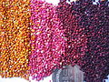 Colored quinoa Genebank INIA Juliaca.JPG