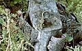 Colorful, lizard Fortepan 60207.jpg