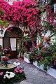 Colorful Courtyards in Cordoba Spain - Fiesta De Los Patios De Cordoba (18280267805).jpg