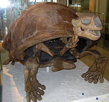 Colossochelys atlas.jpg