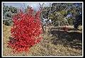 Colour in the Bush-1 (5656749939).jpg