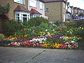 Colourful garden, Aultone Way, Sutton. - geograph.org.uk - 47946.jpg