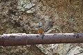 Common kingfisher (6).jpg