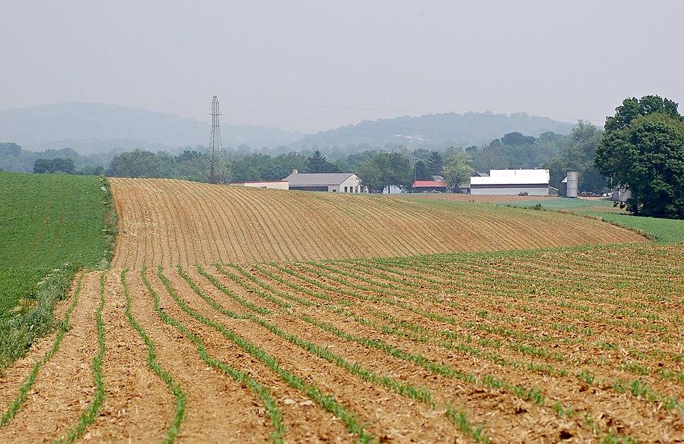 Corn Zea mays Field Rows 2000px