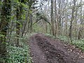 Cotswold Way path in Standish woods - geograph.org.uk - 162080.jpg
