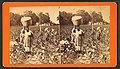 Cotton field, by J. A. Palmer 11.jpg
