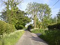 Country Road, Co Meath - geograph.org.uk - 1892106.jpg