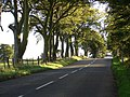 Country road to Stanmore House - geograph.org.uk - 566952.jpg