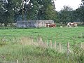 Cows by the pillbox - geograph.org.uk - 1453585.jpg