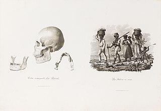 Crâne remarquable d´un Botocude
