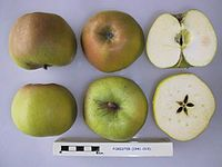 Cross section of Forester, National Fruit Collection (acc. 1941-019).jpg