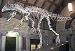 Cryolophosaurus ellioti theropod dinosaur (Hanson Formation, Lower Jurassic; Mt. Kirkpatrick, Queen Alexandra Range, Transantarctic Mountains, Antarctica) 9 (31216520097).jpg