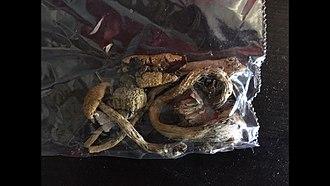 Psilocybin mushroom - A bag of 1.5 grams of psilocybe cubensis mushrooms.