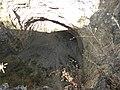 Cueva del hoyanco - panoramio.jpg