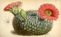 Curtis's Botanical Magazine, Plate 4326 (Volume 73, 1847).png