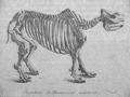 Cuvier Rhinoceros unicorne.png