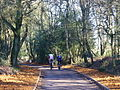 Cycling on Gibbet Hill - geograph.org.uk - 684160.jpg
