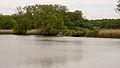 D32 Dippelsdorfer Teich Naturschutzgebiet (7).jpg