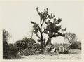 Daddelpalm, kaktus och pepparträd - SMVK - 0307.a.0067.b.tif